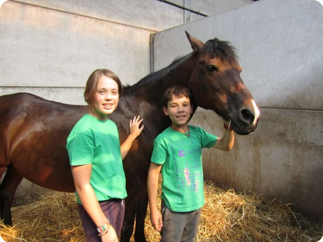 Paardrijden en Français