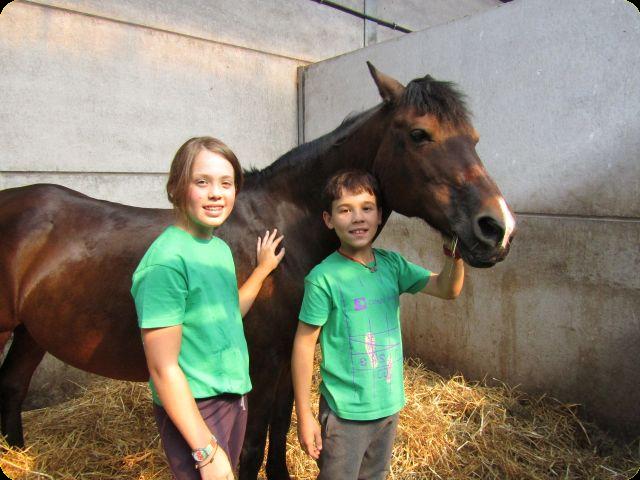 Paardenmix